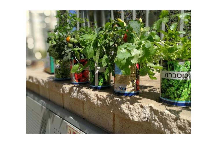 ערוגה בפחית, ערכת גידול ירקות, ערכת גידול צמחי תבלין, מתנה לטו בשבט, מתנה ממותגת