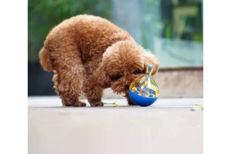 צעצוע ממכר לכלב ולחתול