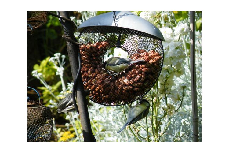 מתקן האכלה רשת לציפורים דגם דונאטס