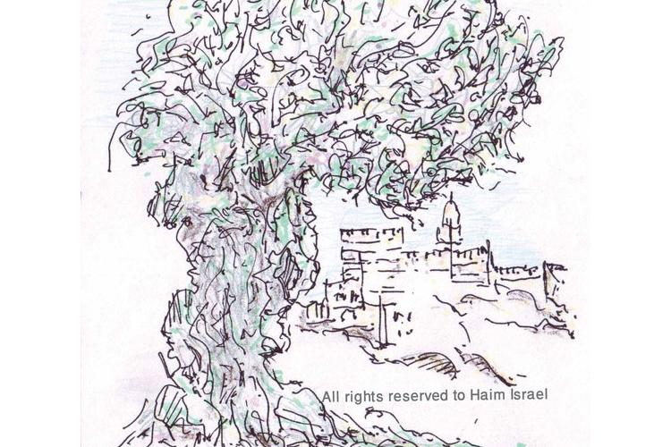 מגדל דוד ועץ זית - גלויה מודפסת (מס' 13)