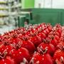 רימונים עשויים מקרמיקה בגדלים שונים ובשלל צבעים.