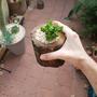 עציץ קטן מעץ-בולקקטוס קטן