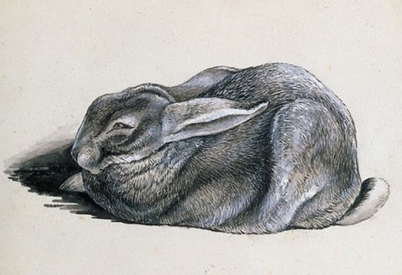 The Art of Beatrix Potter - קלאסי