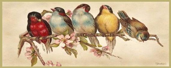 תוצאת תמונה עבור ציפורים על ענף